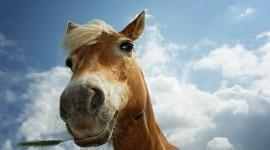 Horses Wallpaper For PC