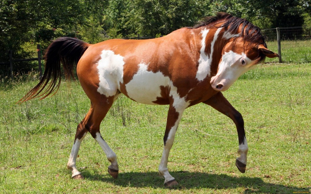 Horses wallpapers HD