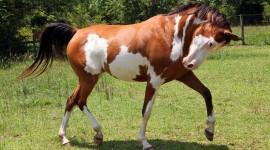 Horses Wallpaper Free