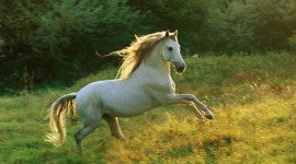 Horses Wallpaper Gallery