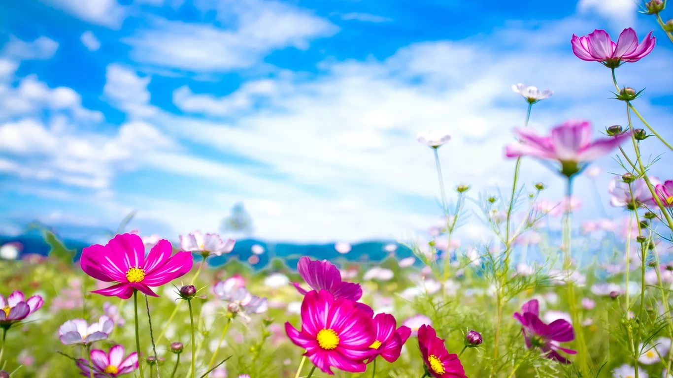 june wallpapers high quality download free