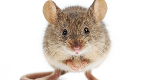 Mouse wallpapers high quality