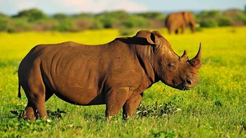 Rhinos wallpapers high quality