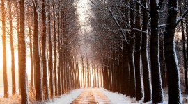 Road Winter Wallpaper High Definition