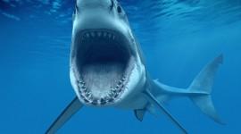 Sharks Desktop Wallpaper