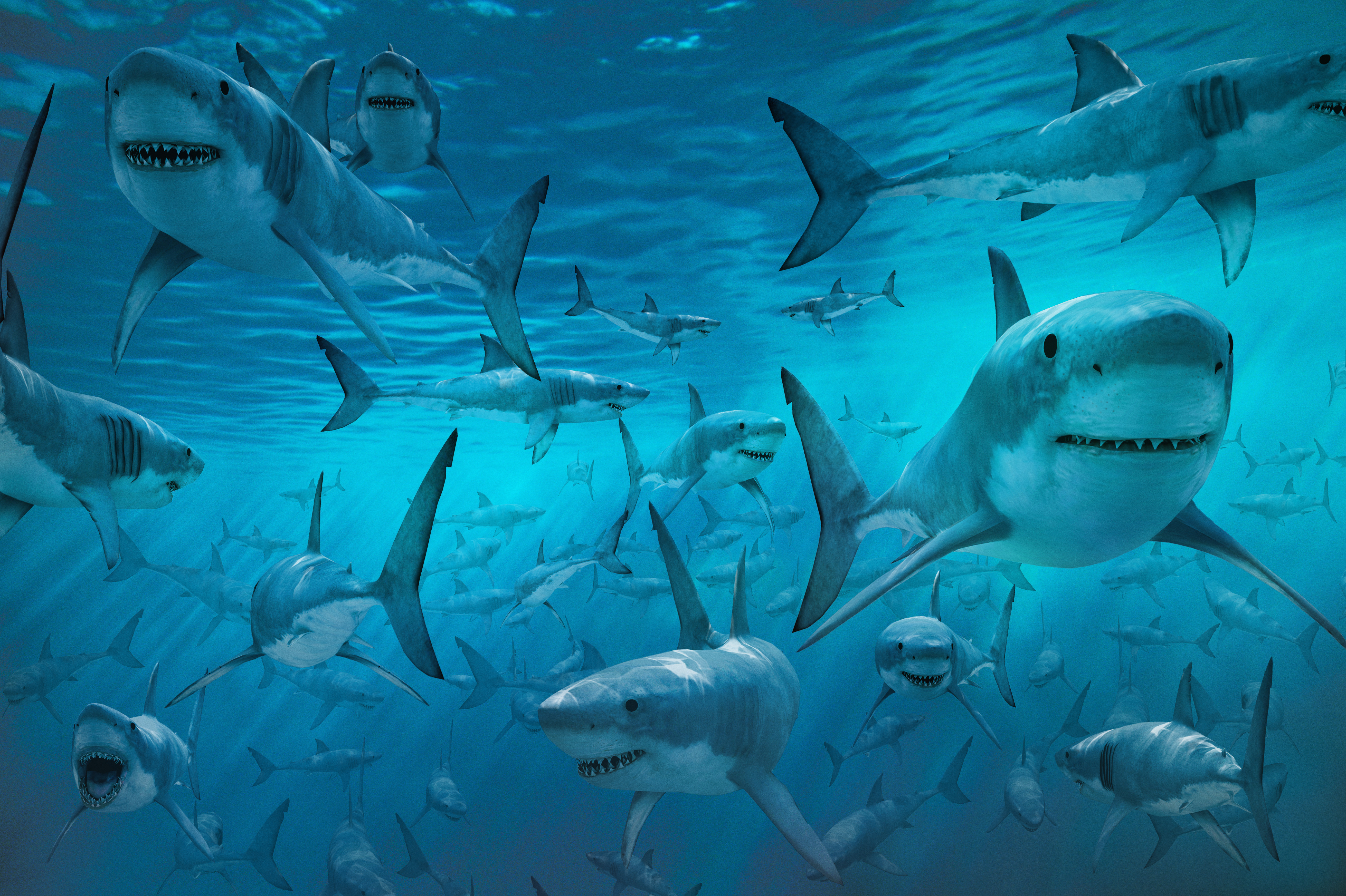 Sharks Wallpapers High Quality Download Free