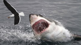 Sharks Photo
