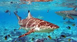 Sharks Wallpaper 1080p