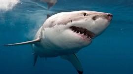 Sharks Wallpaper Gallery