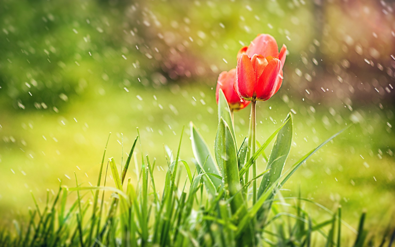 Spring wallpapers high quality download free - Backgrounds springtime ...