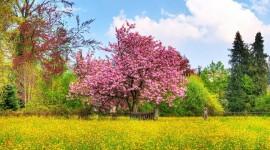 Spring Desktop Wallpaper Free