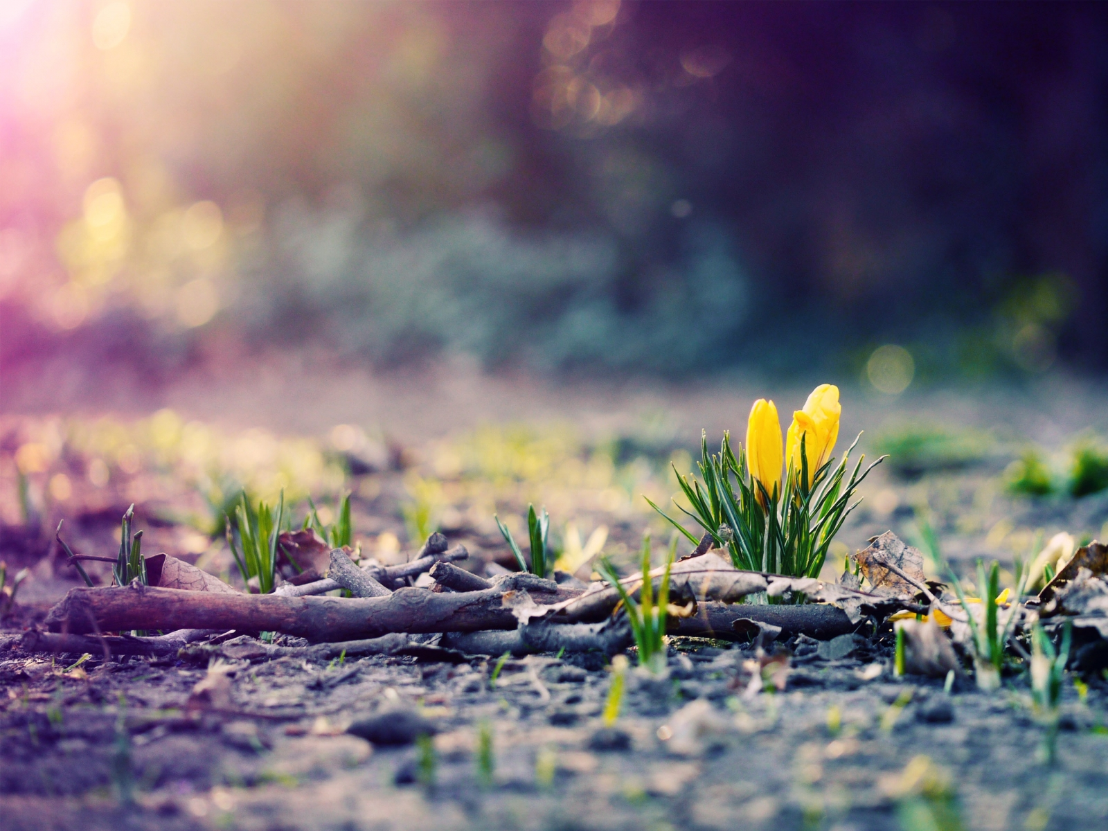 4k Spring Wallpapers High Quality: Spring Wallpapers High Quality