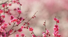 Spring Wallpaper For Android