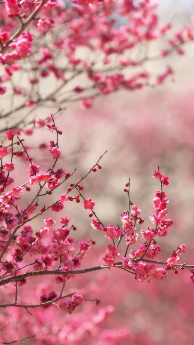 Spring Wallpapers High Quality Download Free