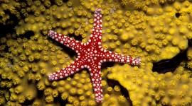 Star of the Sea Desktop Wallpaper Free