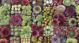 Succulents Wallpaper 1080p
