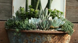 Succulents Wallpaper For IPhone Free