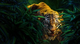 The Jungle Book Picture Download