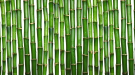 Bamboo Wallpaper Download