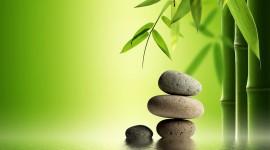 Bamboo Wallpaper Download Free