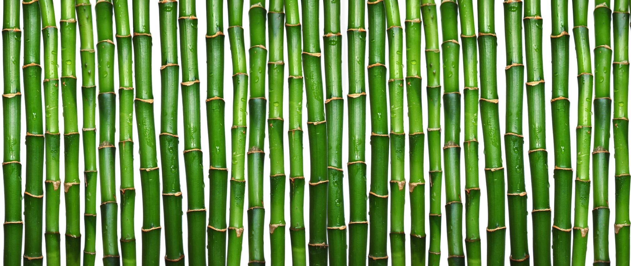 bamboo wallpapers high quality