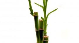 Bamboo Wallpaper For Mobile