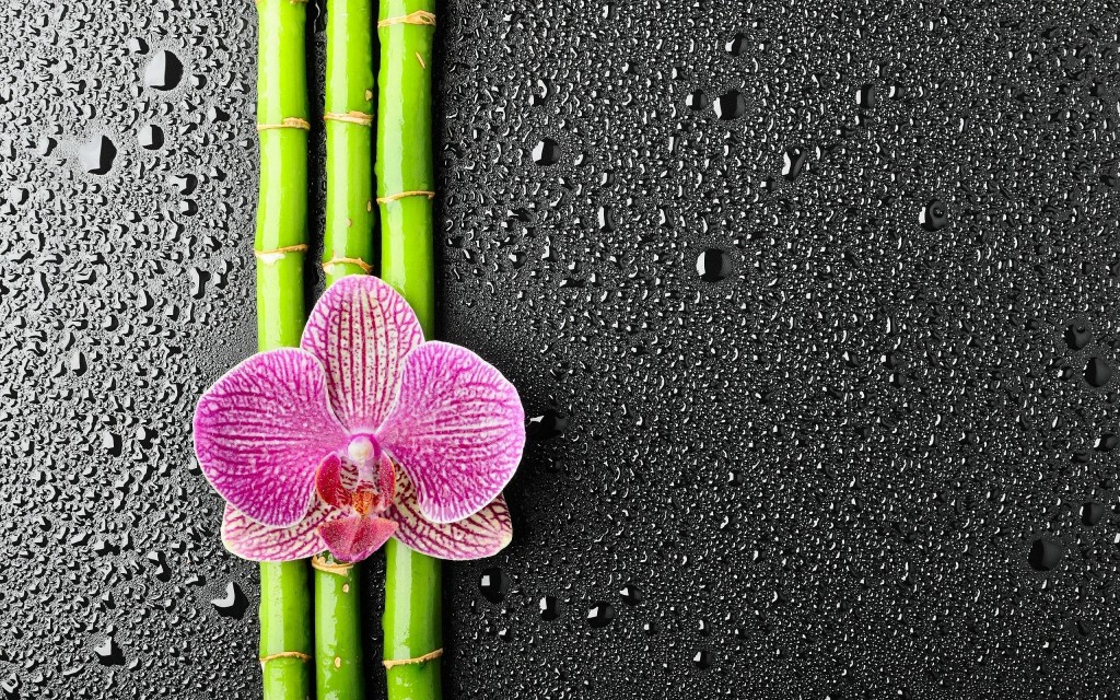 Bamboo wallpapers HD