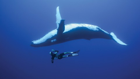 Whales wallpapers high quality