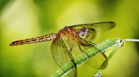 4K Dragonflies Best Wallpaper