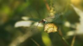 4K Dragonflies Photo