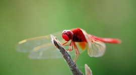 4K Dragonflies Photo Download