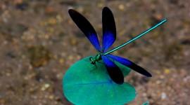 4K Dragonflies Photo Free