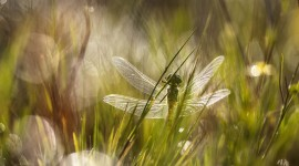 4K Dragonflies Wallpaper Download Free