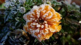 4K Flowers in the Frost Photo#1
