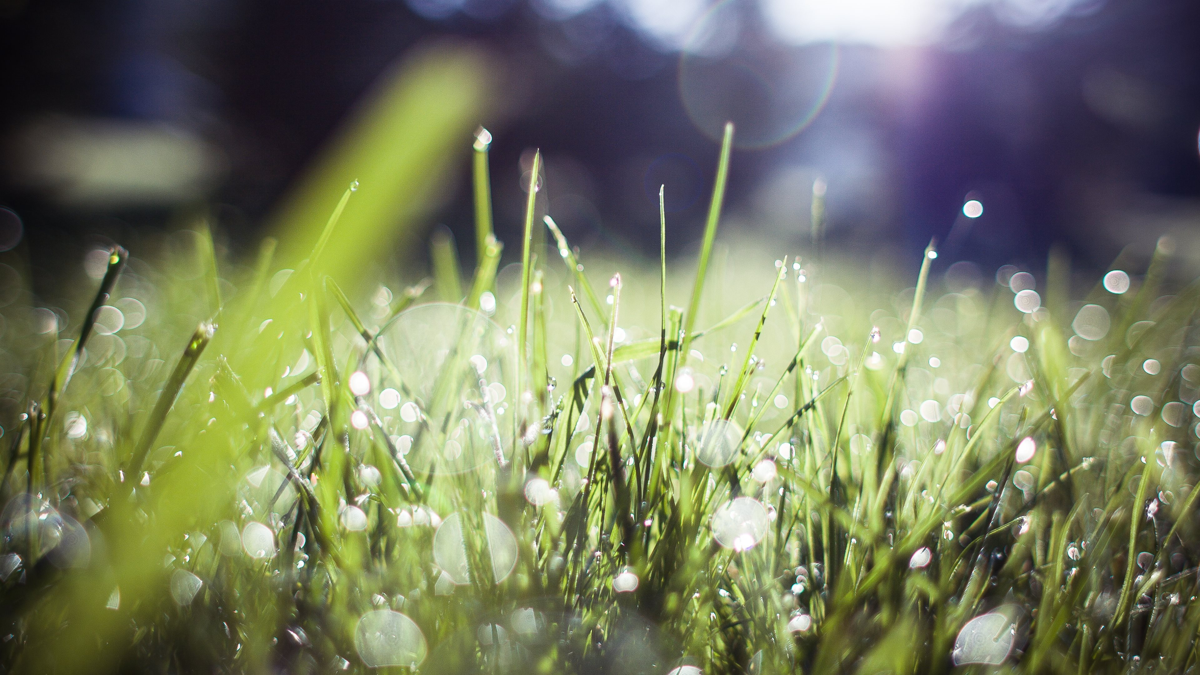 4k morning dew wallpapers high quality | download free