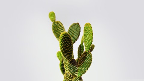 Cactuses wallpapers high quality