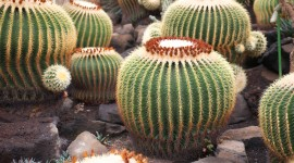 Cactuses Wallpaper For Desktop