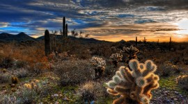 Cactuses Wallpaper For PC