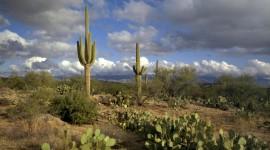 Cactuses Wallpaper Full HD