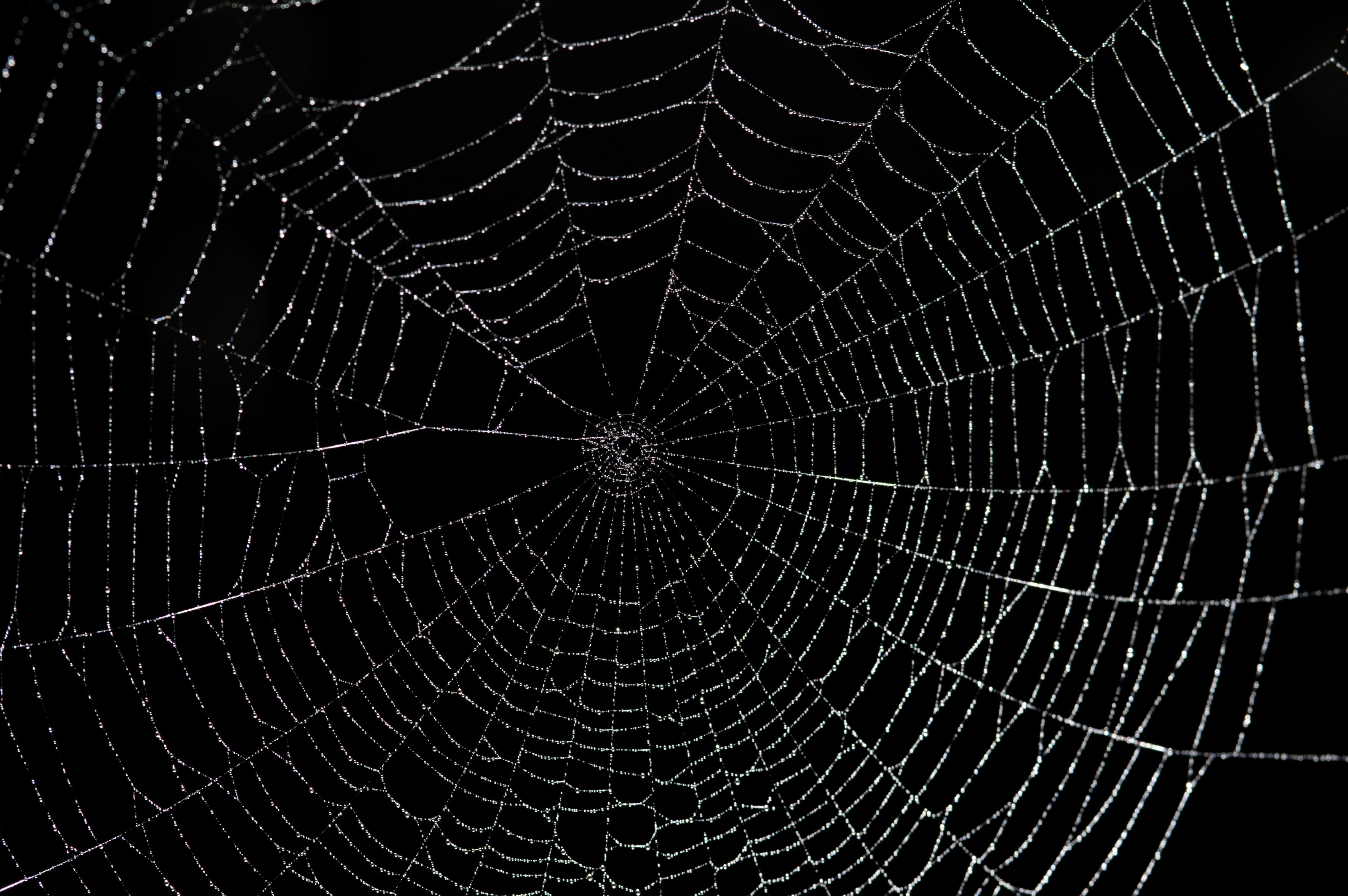 Cobweb wallpapers high quality download free - Moving spider desktop ...
