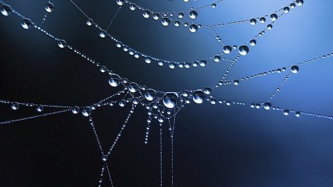 Cobweb wallpapers high quality