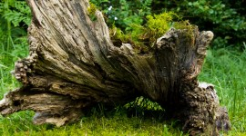 Driftwood Photo