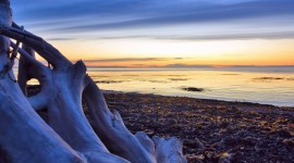 Driftwood Photo Download