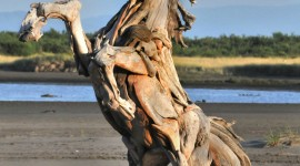 Driftwood Wallpaper For IPhone Free