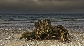 Driftwood Wallpaper For PC