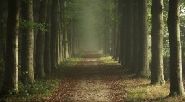 Forest Picture Download