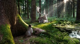 Forest Wallpaper Download Free