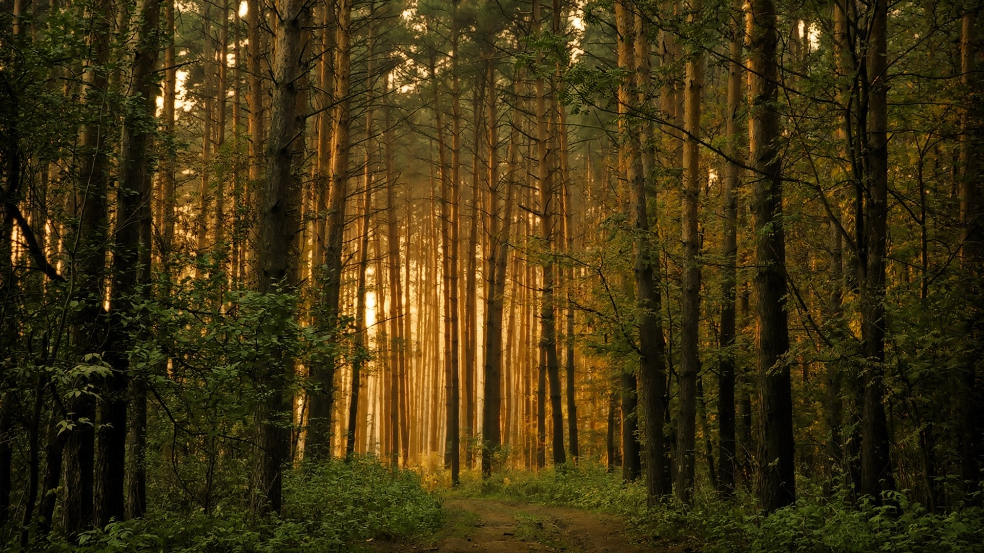 Forest Wallpapers High Quality Download Free