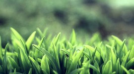 Grass Wallpaper Download Free