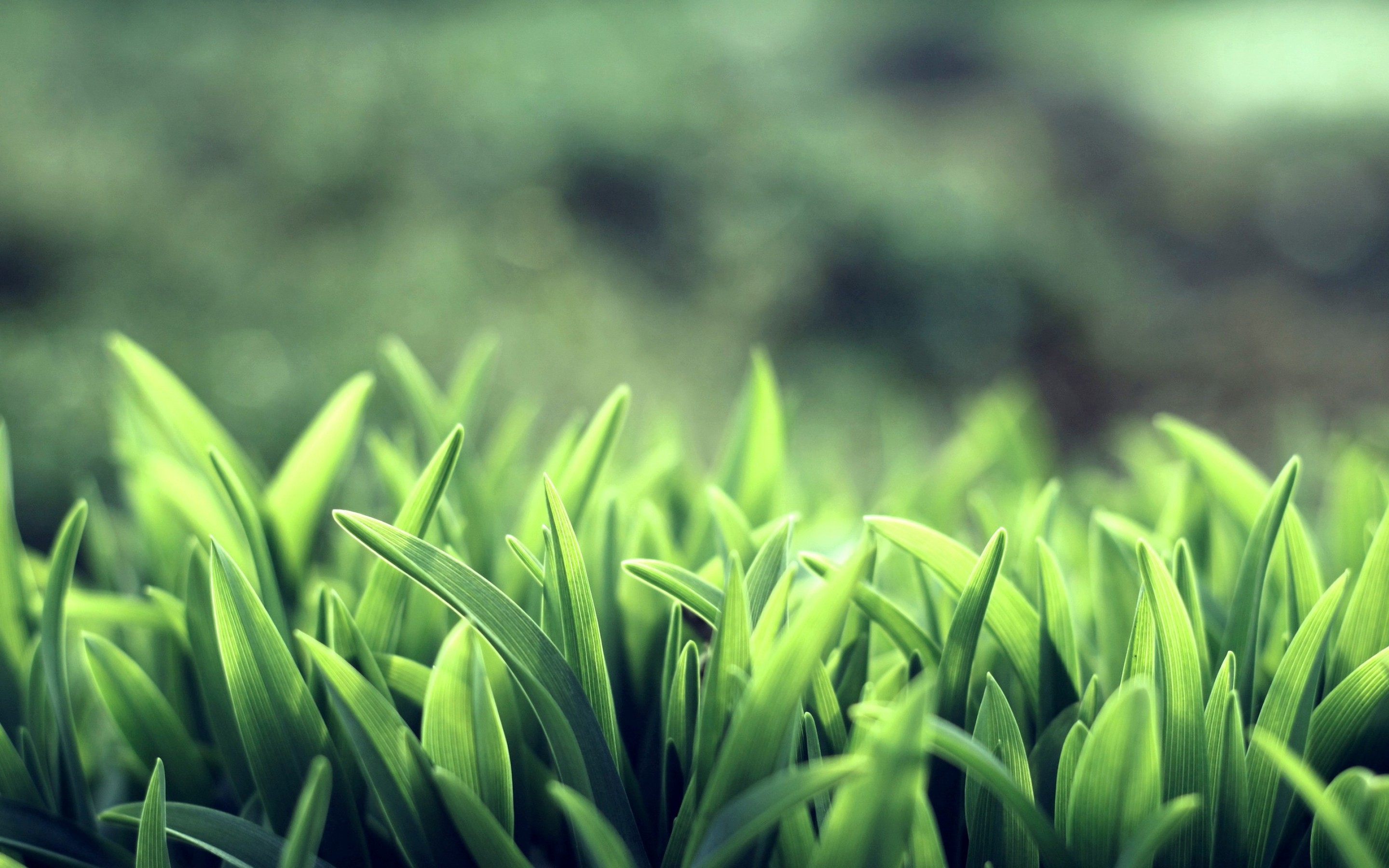 Download Wallpapers Download 2790x2547 Animals Grass: Grass Wallpapers High Quality